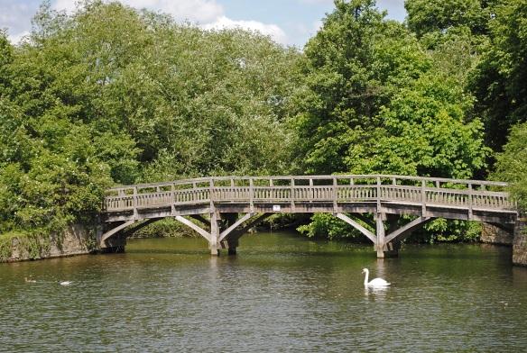 Swans Life