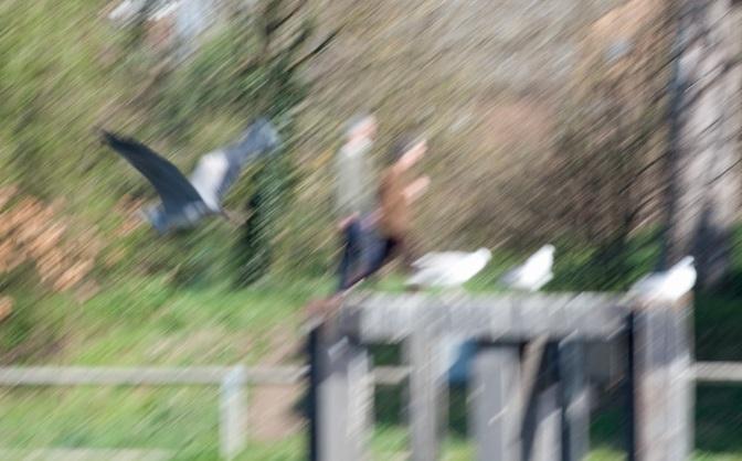 Early Spring at Teddington Lock