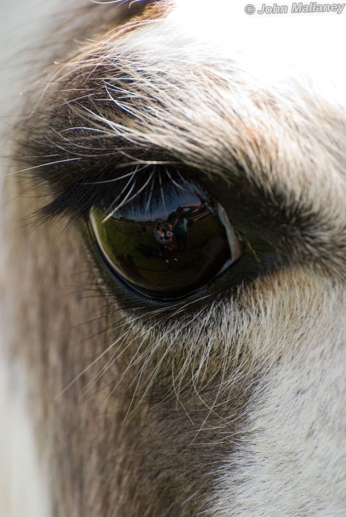 Eye of the Llama
