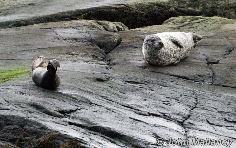 Seals of Loch Coruisk