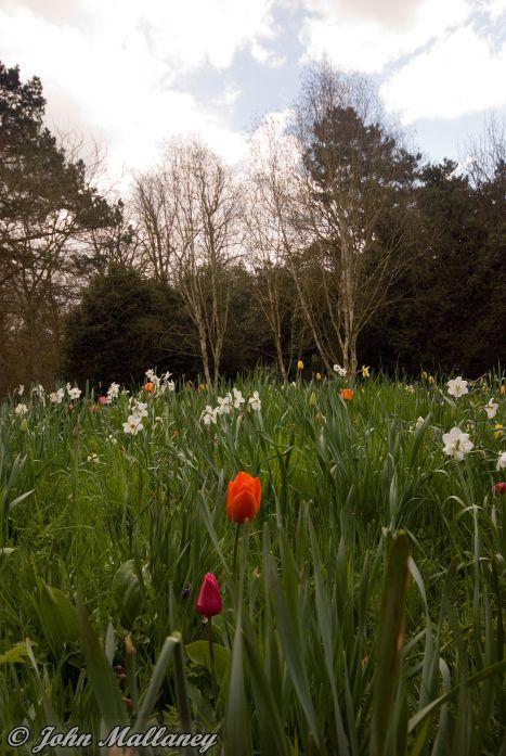 Ascott House gardens