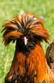 Laced Polish Chicken