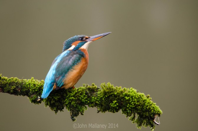 Kingfisher Pt 3