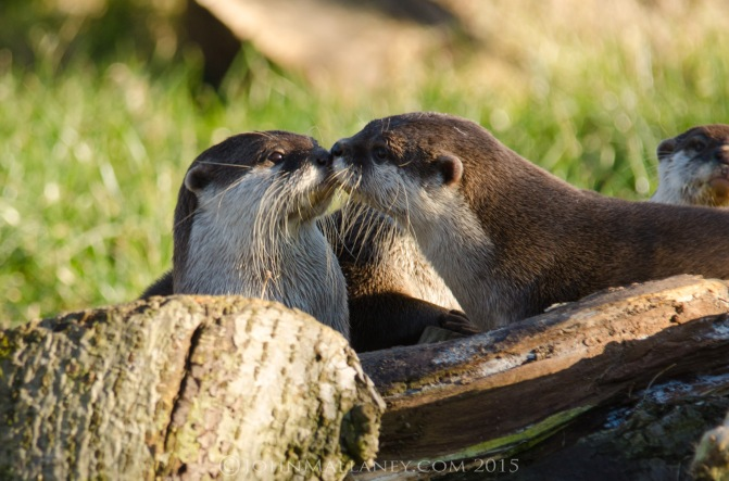 True Love – Otter Stylee