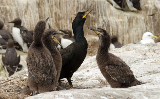Shag with Chicks