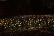 Filed of Light by Bruce Munro