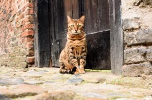 A Model Cat!