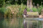 Osprey - Successful Dive
