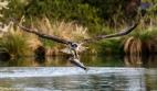 Osprey (T7) Fishing